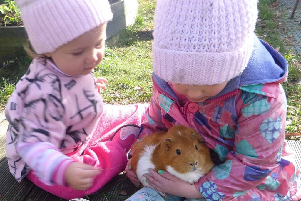 Children cuddling and caring for early childhood centre pet guinea-pig.