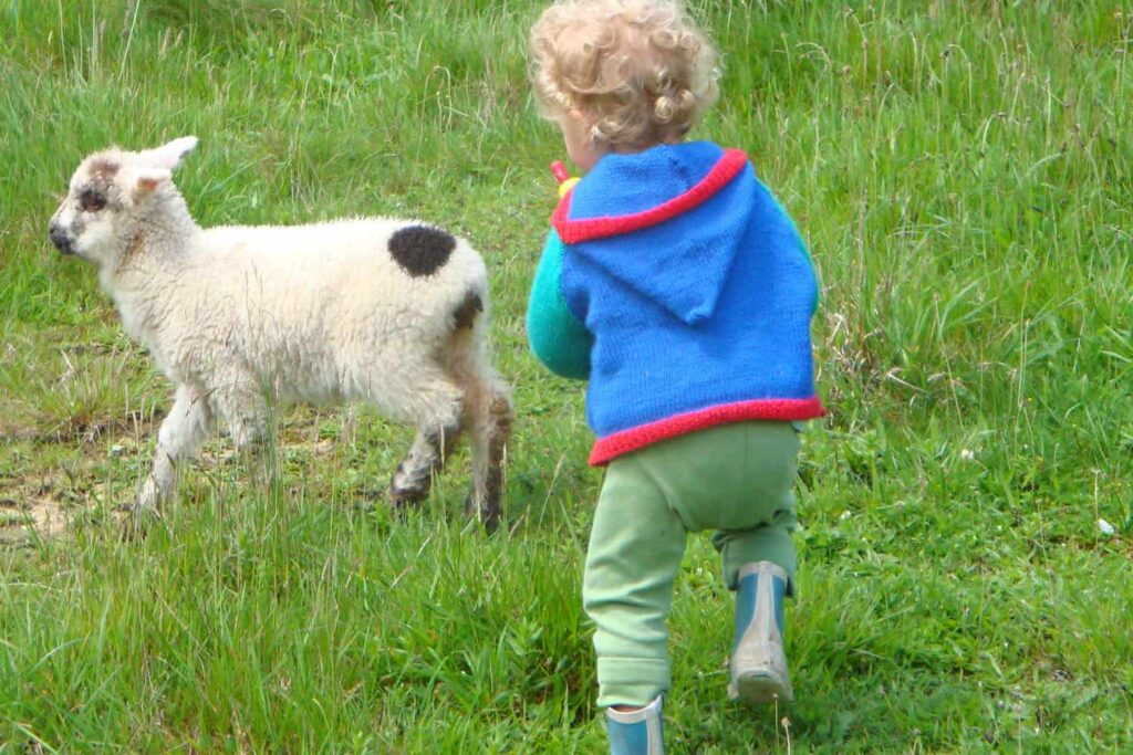 Toddler with bottle of milk to feed lamb.